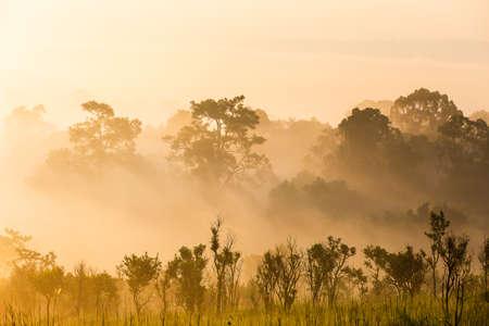 Pine tree forest landscape Stockfoto