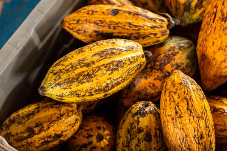 Cocoa beans and cocoa pod Reklamní fotografie - 118832363