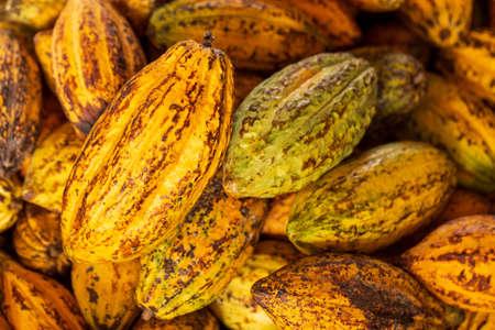 Cocoa beans and cocoa pod Reklamní fotografie - 118832575