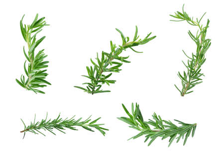 Twig of rosemary on a white background Reklamní fotografie