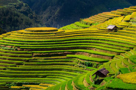 Rice fields on terrace in rainy season at Mu Cang Chai, Yen Bai,