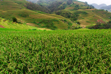 Rice fields on terrace in rainy season at Mu Cang Chai, Yen Bai Reklamní fotografie