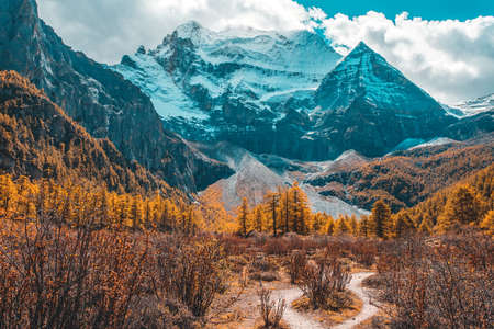 Colorful in autumn forest and snow mountain at Yading nature reserve