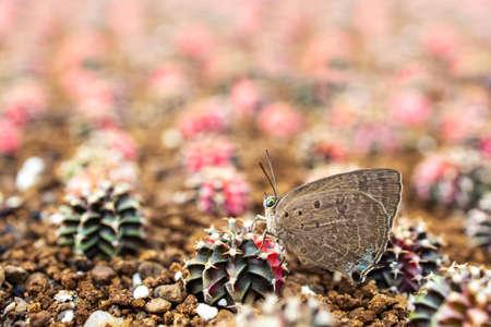 Closeup  Beautiful butterfly on cactus Foto de archivo