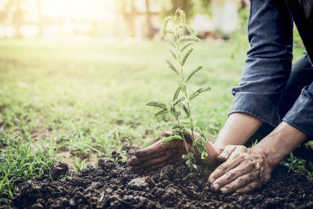 Young man planting the tree in the garden as earth day and save world concept, nature, environment and ecology. 写真素材