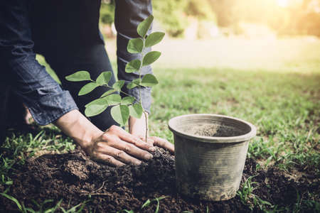 Young man planting the tree in the garden as earth day and save world concept, nature, environment and ecology. Imagens