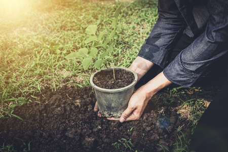 Young man planting the tree in the garden as earth day and save world concept, nature, environment and ecology. Stock fotó