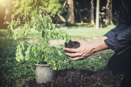 Young man planting the tree in the garden as earth day and save world concept, nature, environment and ecology. Stock Photo