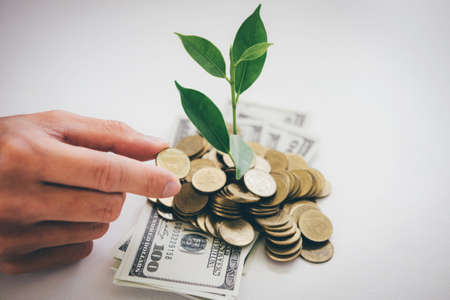 Hands of businessman putting coin into plant sprouting growing from golden coins and banknotes, business investment and strategy concept.