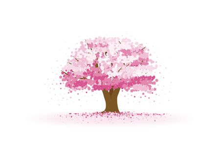 Cherry tree with cherry blossom petals falling