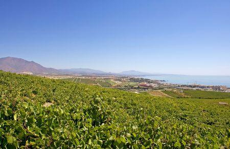 overlooking: Espa�ol con vistas a los vi�edos a trav�s de Duquesa Manilva Marbella y Manilva monta�a de La Concha y Sabanillas duquesa todos y zonas pr�ximas de la Costa del Sol