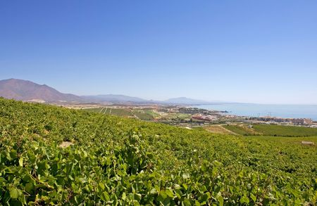 costa del sol: Spanish vineyards overlooking Duquesa Manilva through to Marbella and La Concha mountain Manilva Sabanillas and duquesa are all up and coming areas on the Costa del Sol