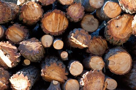 kindling: Sunny side view of a pile of fresh logs for sale Stock Photo