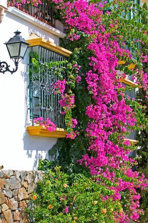 pueblo: Purple or pink bouganvilla on side of house in Spanish pueblo