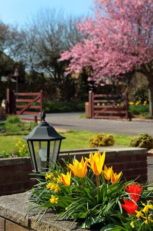 Beautiful colourful English country garden in Spring with pretty flowers and blossom on the tree photo