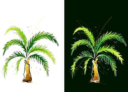 cycad: Representation of cycad