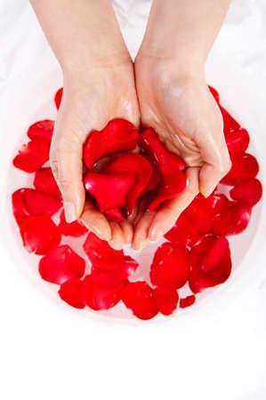leisureliness: Womans hands holding rose petals, close up