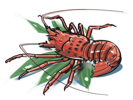 spiny: Spiny lobster