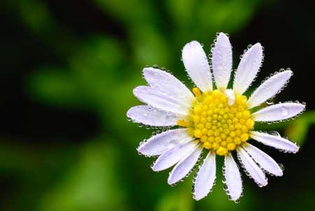 green world: flower blooming