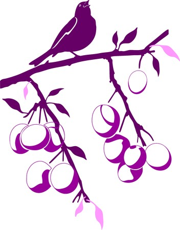 Bird sitting on a branch of plum with fruits Vector