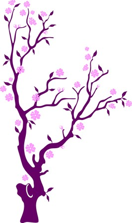 sakura blooming pink flowers, isolated on white background Stock Vector - 7123286