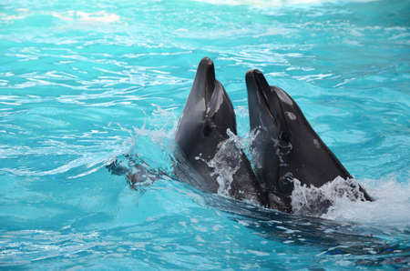 Two dolphins dancing in light blue water Stock Photo