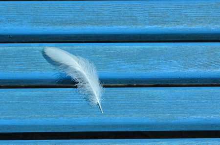 White swan feather on blue wooden boards texture background
