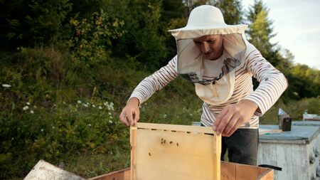 beekeeper stands near the hives holding bee frame in which there is a honeycomb