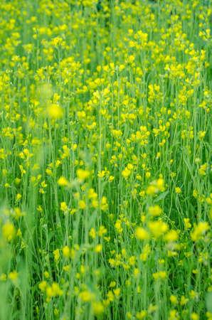 grassy field: herb meadow