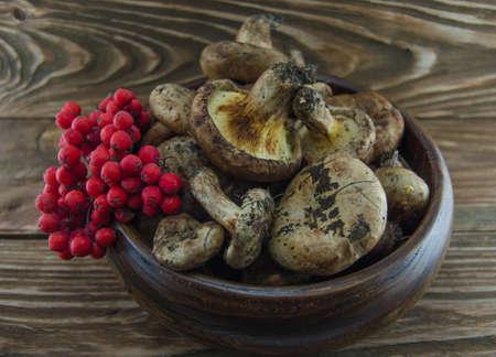 eberesche: Pilze und Vogelbeere Lizenzfreie Bilder