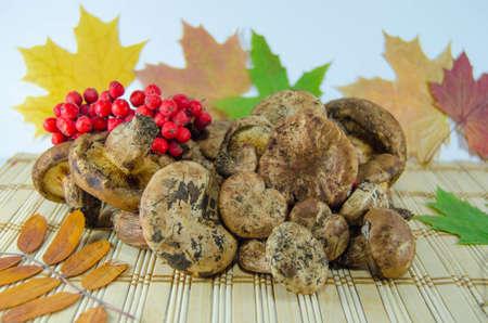 eberesche: Mushrooms and rowan