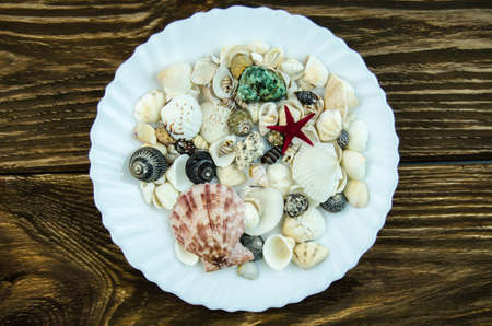 quantities: Shells in large quantities Stock Photo