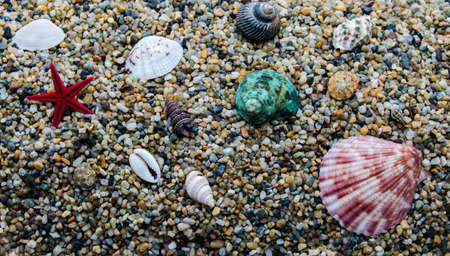 molluscs: A variety of marine molluscs on sea sand in large quantities Stock Photo