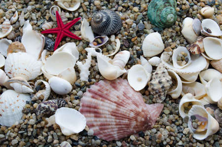 quantities: A variety of marine molluscs on sea sand in large quantities Stock Photo