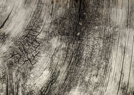 tree felling: texture of old wood Stock Photo