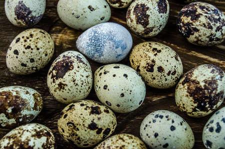codorniz: Huevos de codorniz manchado Foto de archivo
