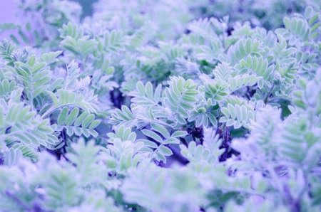green plants: green petals plants Stock Photo