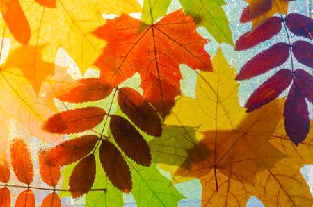 kropla deszczu: colorful autumn leaves Zdjęcie Seryjne