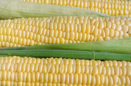 planta de maiz: Corn seeds close-up Foto de archivo