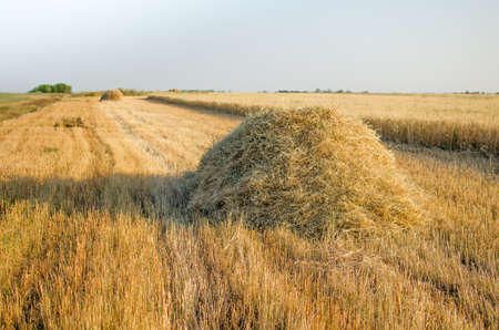 haystack: Haystack on the field. Stock Photo