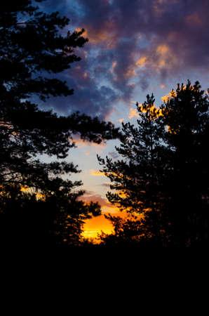 Dunkler Waldweg bei Sonnenuntergang