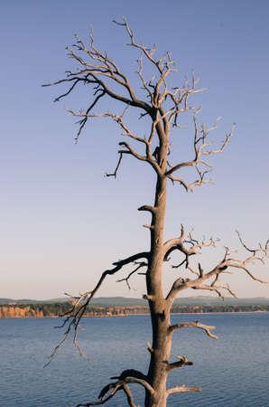 arboles secos: Old dead trees.
