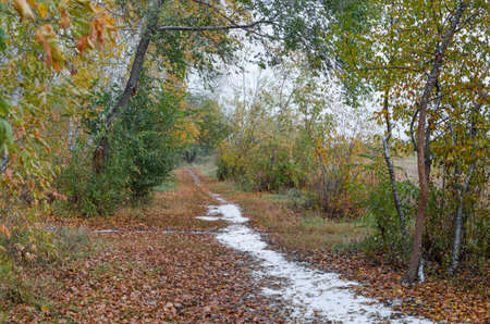 fall winter: The trail in the forest. Stock Photo