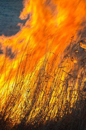 quemado: Burning reeds on the shore of the lake in the spring