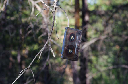 weighs: Old audio cassette weighs on the old pine branch