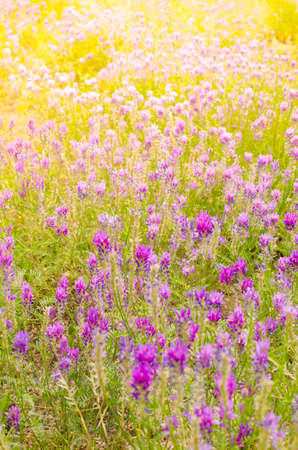 Meadow with colorful flowers in the sun