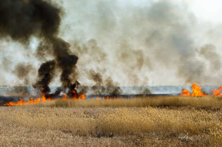 Strong fire and smoke, grass and reeds in flames.Black smoke.