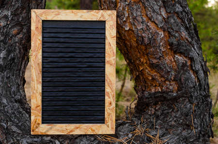 Clean letter board is installed on a pine tree in the forest.