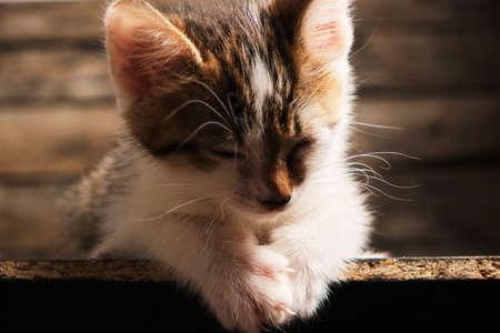 Sleeping small, beautiful gray and white kitten