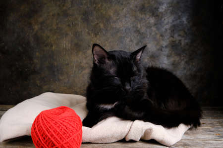 Black cat sleeps on a light, warm jacket next to a red ball of thread